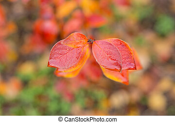 red wet autumn leaves