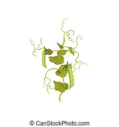 Branch with ripe green peas pods and leaves. Flowering leguminous plant. Agricultural crop. Flat vector icon