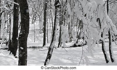 Branch With Snow Swaying In Winter Forest