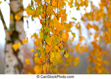 Branch with the turned yellow leaves of a birch in the fall time