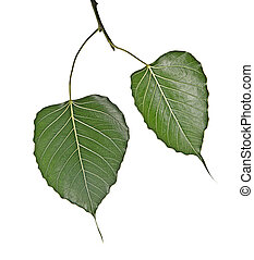 Branch with two leaves