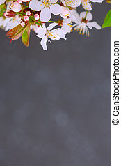 Branch with white flowers and gray background