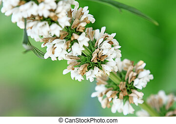 branch with white flowers on a green background with bokeh
