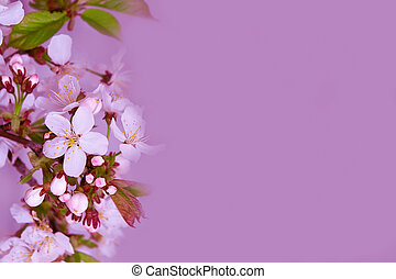 Branch with white flowers spring background