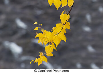 branch with yellow autumn leaves