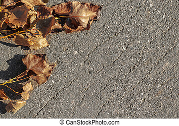 Branch with yellow autumn leaves on the asphalt