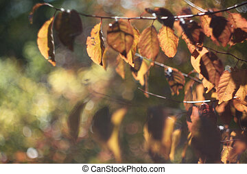 Branch with yellow-brown leaves close-up, autumn textra