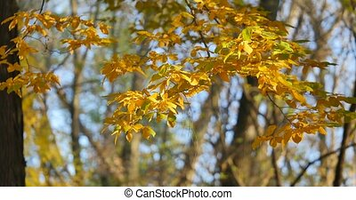 Branch with yellow leaves against the sky.