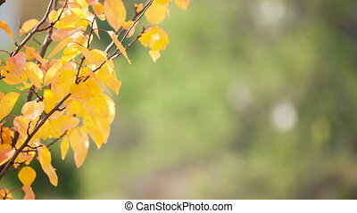 Branch with yellow leaves on a green blurred background