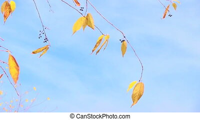 branch with yellow leaves on cloudy sky