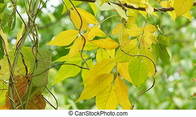 Branch With Yellowed Tree Leaves Swaying On Breeze