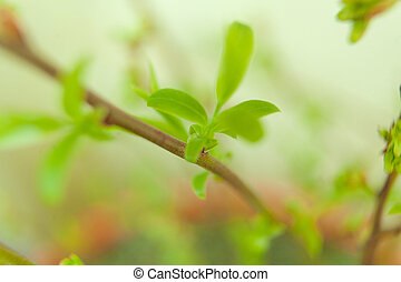 branch with young green sprouts in the spring on blurred background
