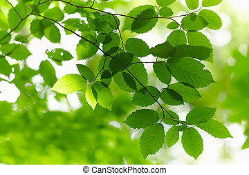 branch., zielony