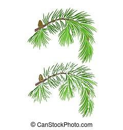branche, arbre, cône, neige, noël, vecteur, pin