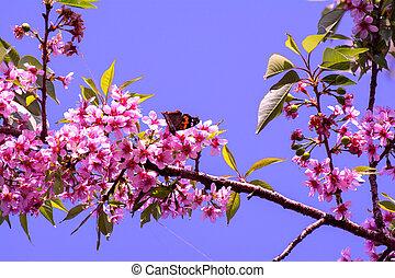 branche, arbre, fleurs, fleurir, fleurs, pêche, rouges, printemps, rose, bourgeons, beau