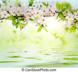branche, arbre, fleurs, printemps, blanc