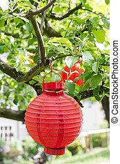 branche, arbre, rouges, lanterne