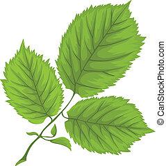 branche, congés trois, arrière-plan vert, blanc