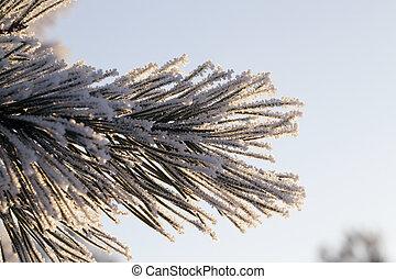 branche, dans, neige