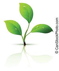 branche, de, pousse, à, feuilles vertes