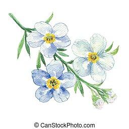 branche, myosotis, bleu