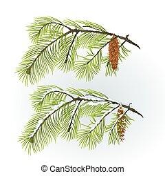 branche, neigeux, hiver, cône, vecteur, automnal, pin, blanc
