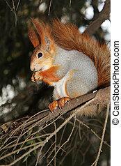 branche, repas, écureuil, pin, mains