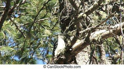 branche, reposer, pic