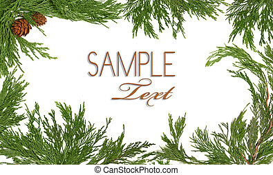 branche, themed, árbol hoja perenne, marco, árbol de navidad...