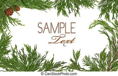 branche, themed, 常緑樹, フレーム, クリスマスツリー, 松かさ