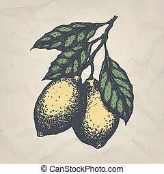 branche, vendange, main, vecteur, citrons, dessiné, style., illustration.