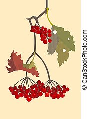 branche, viburnum