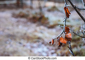 Branche with dry pale orange leaves in hoarfrost late fall