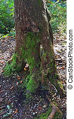branched tree root in the forest