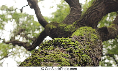 branched tree with moss