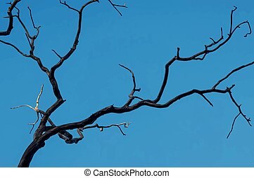 branches against sky in nature