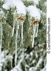 branches, après, arbre, pin, orage glace