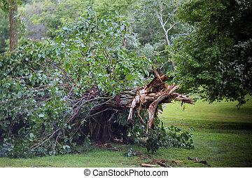 branches, arbre, après, ouragan, arbres, cassé
