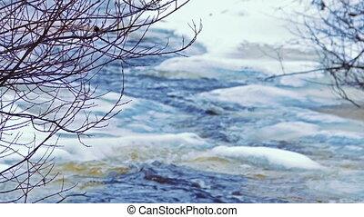 branches, arbre, foyer, jour, forêt, glacé, froid, rivière