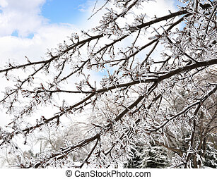 branches, arbre, glace