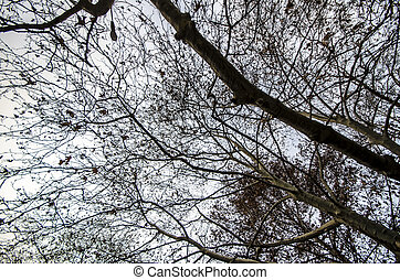 branches, arbre hiver, temps