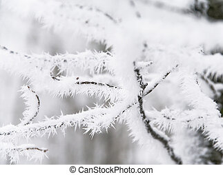 branches are in a hoarfrost