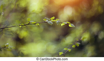 branches, bouleau, fond, spring.