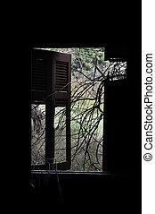 branches broken window