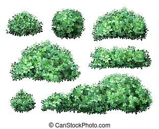 branches, buisson, vecteur, nature, jardin, foliage., arbre, feuilles, shrub., vert, réaliste, buis, buisson, couronne, barrière, illustration, floral, ensemble, saisonnier