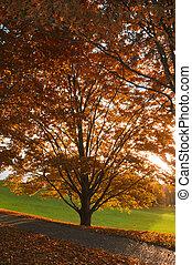 branches, coloré, automne, arbre, par, feuillage, soleil, a, briller
