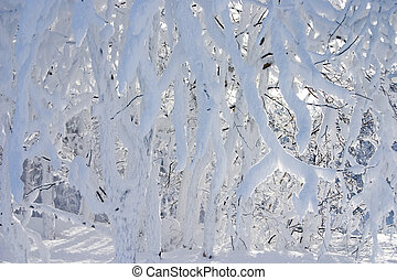 branches covered by a snow in beautiful winter forest