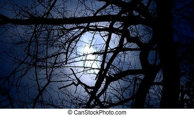 Branches covered sky and cloud.Trunk,forest,woods,Desolate.
