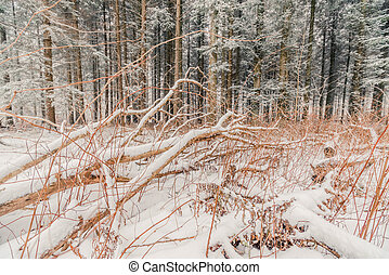 Branches covered with snow in the forest