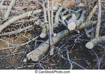 branches cut off a tree piled up on the ground